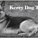 Kerry Dog Training profile image.