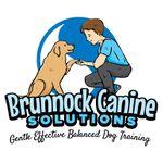 Brunnock Canine Solutions, Dog trainer limerick profile image.
