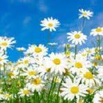 Ma'Alabi    Wellness Centre & Training Academy    Rathangan, Co. Kildare profile image.