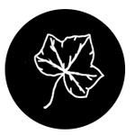 Nicolette Ivy Photography profile image.
