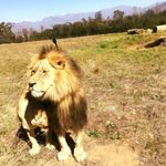 Point Africa Travel and tours profile image.