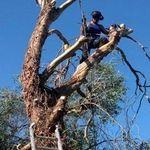 Greenbelt-treesurgery specialists profile image.