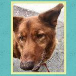 Eco Dog Care LA profile image.
