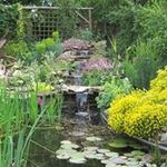 SHAKESPEARES LANDSCAPES LTD profile image.