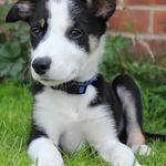 Kate's Pet Care Services profile image.