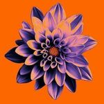 The Bloom Room Floral Company profile image.