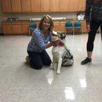 Pawsitive Pup Dog training profile image.