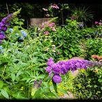 Gilded Garden Girl profile image.