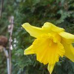 Sans Souci Garden Services profile image.