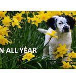 The Pet Behavior Centre profile image.