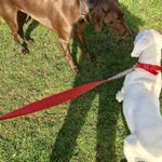 Safe and Sound Hound profile image.