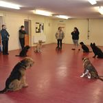 Wakefield Road Safety Dog Club profile image.