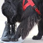 Clever Canine Training & Behaviour Consulting profile image.