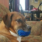 """Wiggles """"N"""" Whiskers Home Pet LLC profile image."""