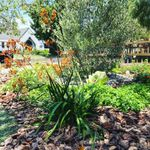 Virgo Designs and Landscaping profile image.