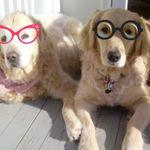 Hayes Happy Dog Boarding DayCare & Training profile image.
