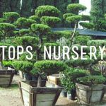 Tops Nursery and Landscaping profile image.