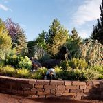 Reno Green Landscaping profile image.