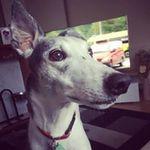 Henry Dog's Daycare profile image.