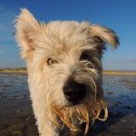 Sage Dog Grooming Services profile image.