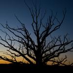 Erron Russell Photo & Video profile image.