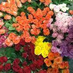 Barbara's Floral profile image.