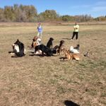 Scotch Pines Dog Training East Idaho profile image.