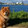 Dandy Dog Walks profile image