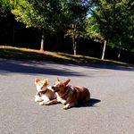 Perfect Pet Dog Training, LLC profile image.