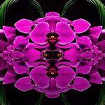 Amazing Flowers Miami profile image.