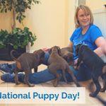 Westway Canine Ltd profile image.