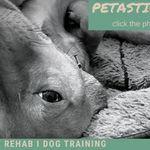 Petastic Pet Care profile image.