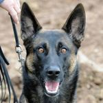 Denver Protection & Obedience Training profile image.