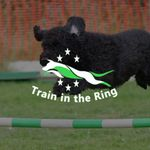Train in the Ring dog walking profile image.