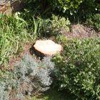 Acorn Tree care ltd