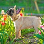 Silver Dog profile image.