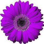 Lakeside Florist profile image.
