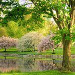 Schedel Arboretum & Gardens profile image.