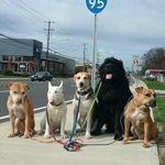Pampered Pals Pet Care profile image.