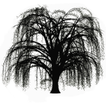 White Willow Weddings profile image.