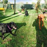 Happy Dog Care profile image.