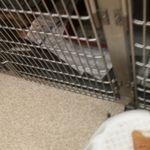 Troy & Wentzville Veterinary Clinic profile image.