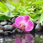 Mind & Body Natural Healing Center profile image.