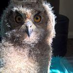 North East Falconry profile image.