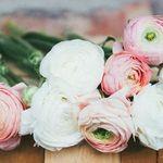 Alissa's Flowers, Fashion & Interiors profile image.
