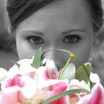 Pegasus Weddings and Events  profile image.