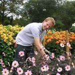 Dave Green Gardens profile image.
