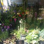 Kingston Garden Services profile image.