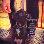Insight Dog Training & Dog Care Services / Erin Burke's Small Animal Care profile image.