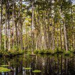 Big Cypress Counseling profile image.